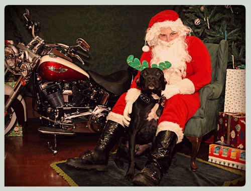 Hey, Santa...how 'bout we take your bike for a spin after our photo shoot?  I can exchange these antlers for doggles.