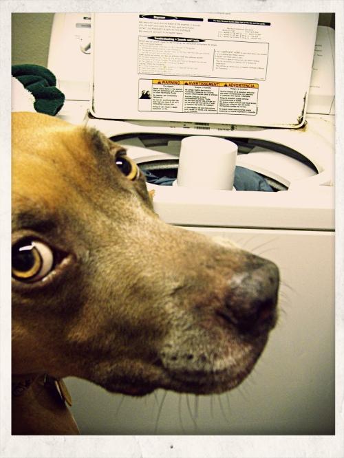 Zella Mans the Washer