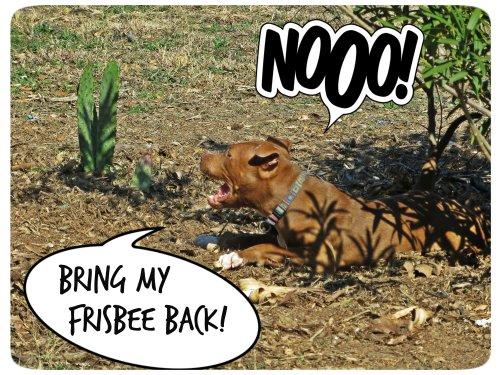 Bring My Frisbee Back
