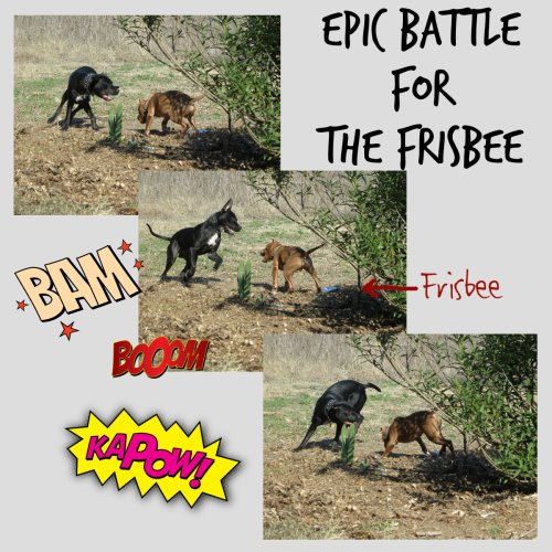 Epic Battle For The Frisbee