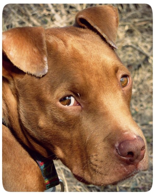 Soulful Pup