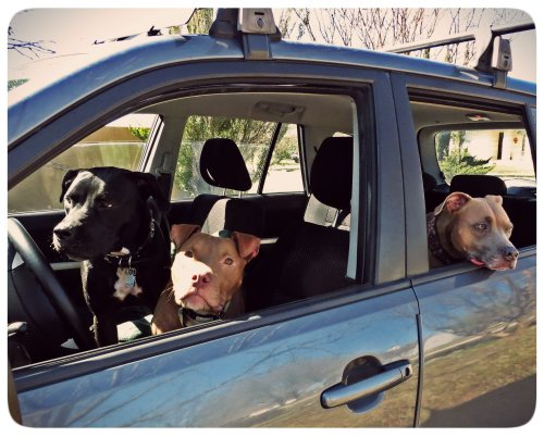 The woofers decided it would be great fun to take a road trip for Zella's birthday (without me, it seems).
