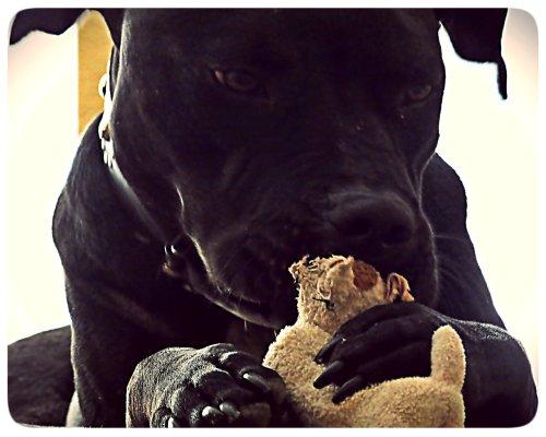 Grimm decided he would befriend Zella's ex-toy.