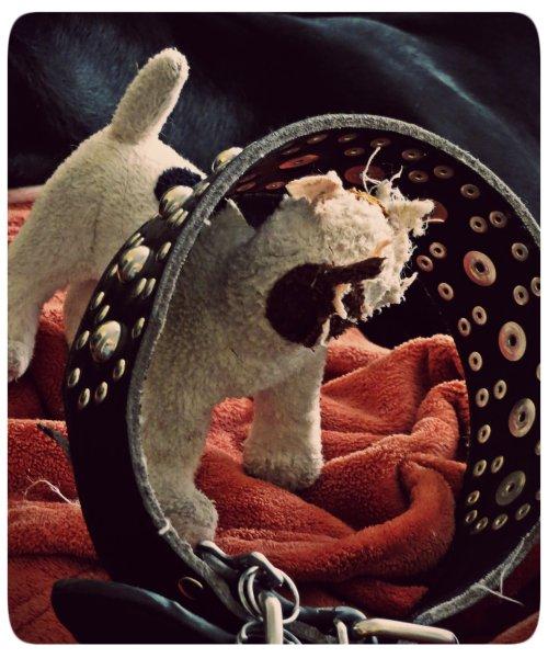 Grimm, in his drunken generosity, gave his collar to his new friend.