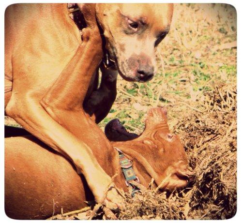 Zella vs. Rufus