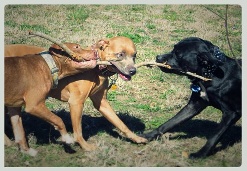Battle Over The Stick