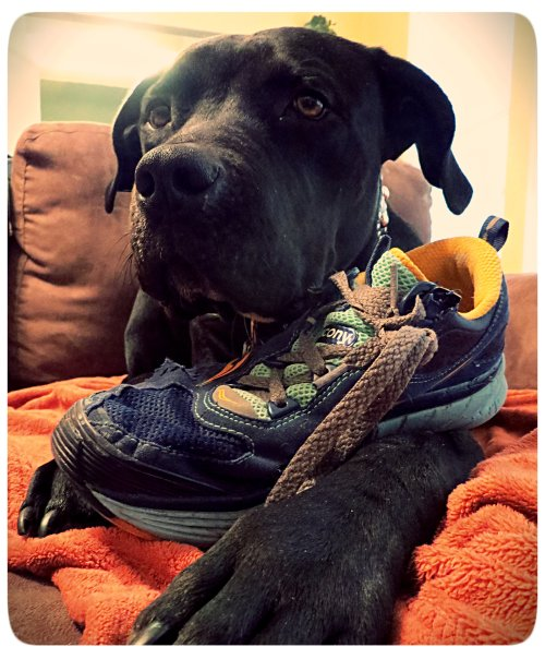 """""""You see this shoe? It thought it was safe, tucked away in it's basket hidden on a shelf. Look who has it now. There is nowhere to hide. None of your shoe friends can save you."""""""