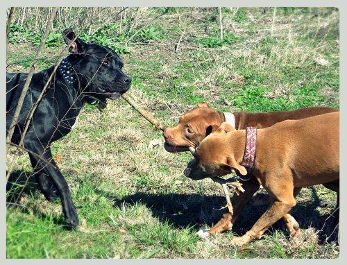Grimm vs. Zella & Rufus