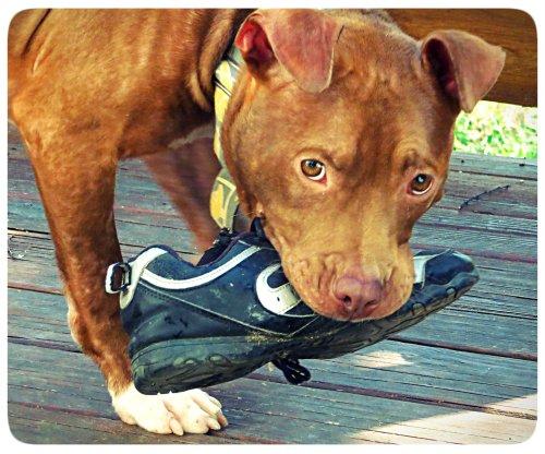 Shoe Eater