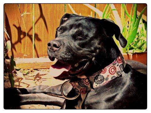 Grimm basks in the spring sunshine.