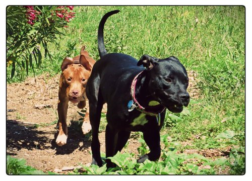 Grimm leads Rufus in finding more spring-time adventures.
