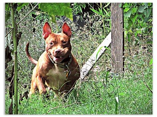 Rufus pre