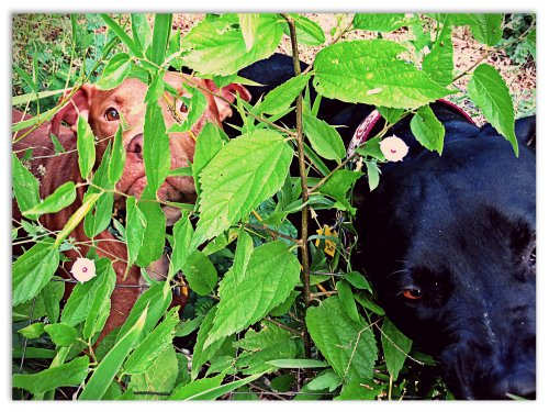 Rufus sticks by Grimm, even when foraging for tasty edible plants.