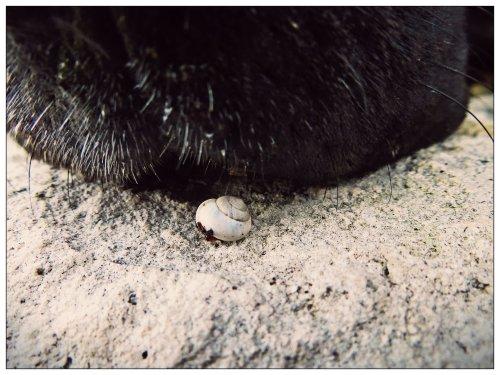 Itty Bitty Snail