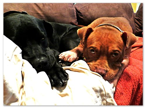 Rufus and Grimm unite in their couch claim.
