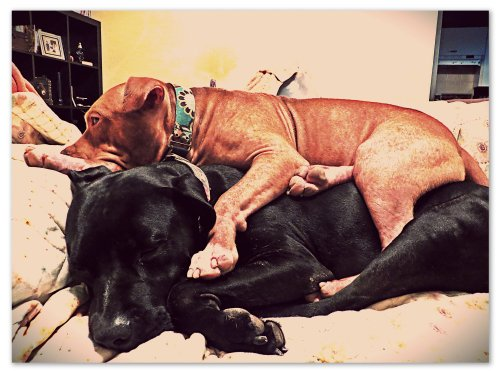 """""""I never want to leave the couch ever again...or you, Grimm."""""""