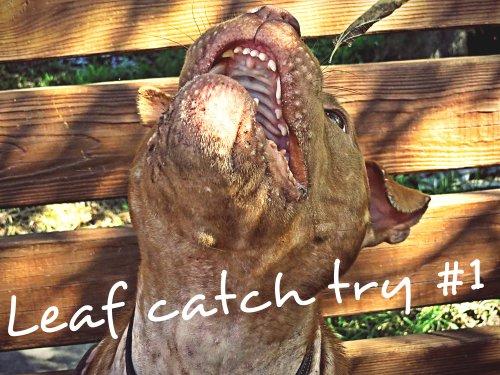 Leaf Catch Try #1
