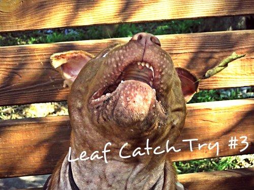 Leaf Catch Try#3