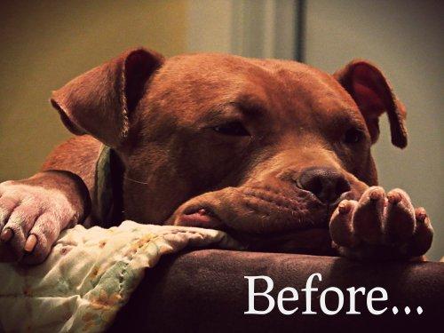 Rufus Before...